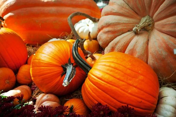 Pumpkin-Round-Up